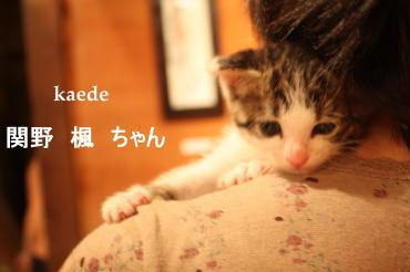 IMG_4574a.jpg